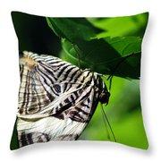 Zebra Long-wing Butterfly  Throw Pillow