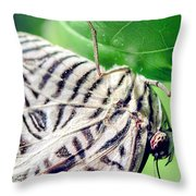 Zebra Long-wing Close-up Throw Pillow