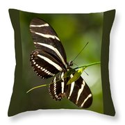 Zebra Longwing 3 Throw Pillow
