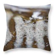 Zebra Stripes In The Tide Pool 1 Throw Pillow
