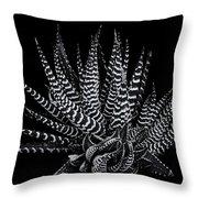 Zebra Succulent Throw Pillow