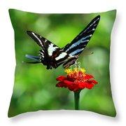 Zebra Swallowtail Butterfly On A Red Zinnia Throw Pillow