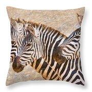 Zebras 5236b Throw Pillow
