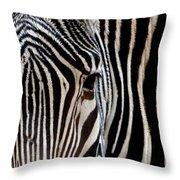 Zebras Face To Face Throw Pillow