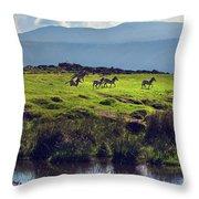 Zebras On Green Grassy Hill. Ngorongoro. Tanzania Throw Pillow