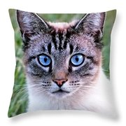 Zing The Cat Looking At Us Throw Pillow