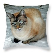 Zing The Cat On The Porch In The Snow 2 Throw Pillow