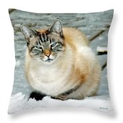 Zing The Cat On The Porch In The Snow Throw Pillow