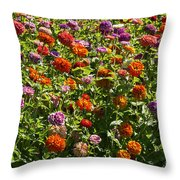 Zinna Variety Throw Pillow