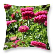 Zinnia Palooza Throw Pillow