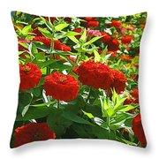 Zinnia Patch-4 Throw Pillow