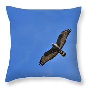 Zone-tailed Hawk Throw Pillow