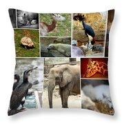 Zoo Collage Throw Pillow