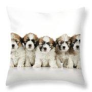 Zuchon Teddy Bear Puppy Dogs Throw Pillow