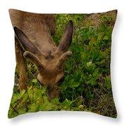 A Young Buck Grazing Throw Pillow