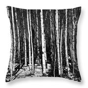 Aspen Tree Trunks Throw Pillow