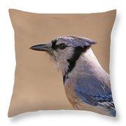 Blue Jay Posing Throw Pillow