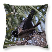 Boat-tailed Grackle - Quiscalus Major Throw Pillow
