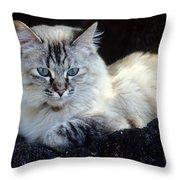On The Rocks--mia Throw Pillow
