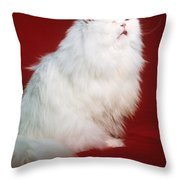 Persian Cat In Distress Throw Pillow
