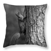 Red Squirrel In Bw Throw Pillow