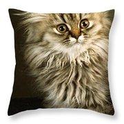 Startled Persian Kitten Throw Pillow