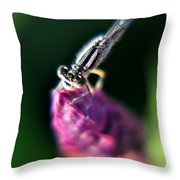 0002 Dragonfly On A Salvia Burgundy Candle Throw Pillow