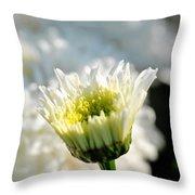 0002 Leucanthemum Cog Hill Awakening  Throw Pillow