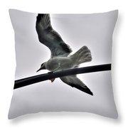 001 Gull To Out Do Wallenda Throw Pillow