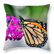 004 Making Things New Via The Butterfly Series Throw Pillow