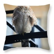 02 Falcon Throw Pillow