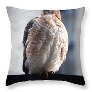 04 Falcon Throw Pillow