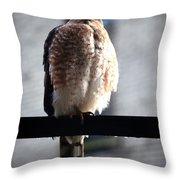 05 Falcon Throw Pillow
