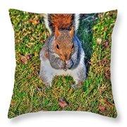 06 Grey Squirrel Sciurus Carolinensis Series Throw Pillow