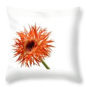 0688c-001 Throw Pillow