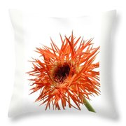 0688c-003 Throw Pillow