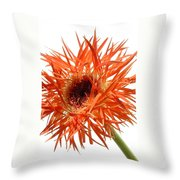0688c-004 Throw Pillow