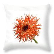 0688c-009 Throw Pillow