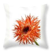 0688c-010 Throw Pillow