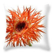0688c-019 Throw Pillow