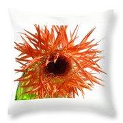 0690c-024 Throw Pillow