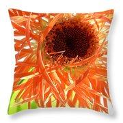 0692c-002 Throw Pillow