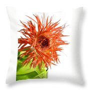 0694c-002 Throw Pillow