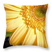 0741.2 Throw Pillow