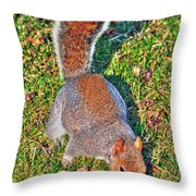 08 Grey Squirrel Sciurus Carolinensis Series Throw Pillow