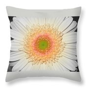 0810-6c Throw Pillow