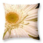 0878.2.1 Throw Pillow