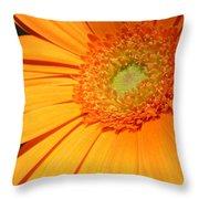 0977-6c Throw Pillow