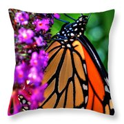 007 Making Things New Via The Butterfly Series Throw Pillow