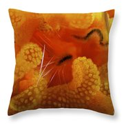 1 Cm Yellow Tube Polyp With A Small Throw Pillow